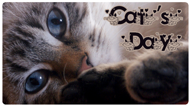 2 featured image cats day