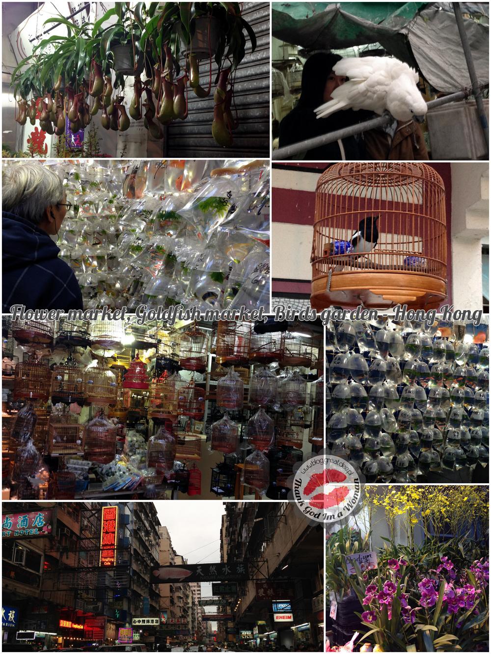 Flower market, Goldfish market, Birds garden - Hong Kong