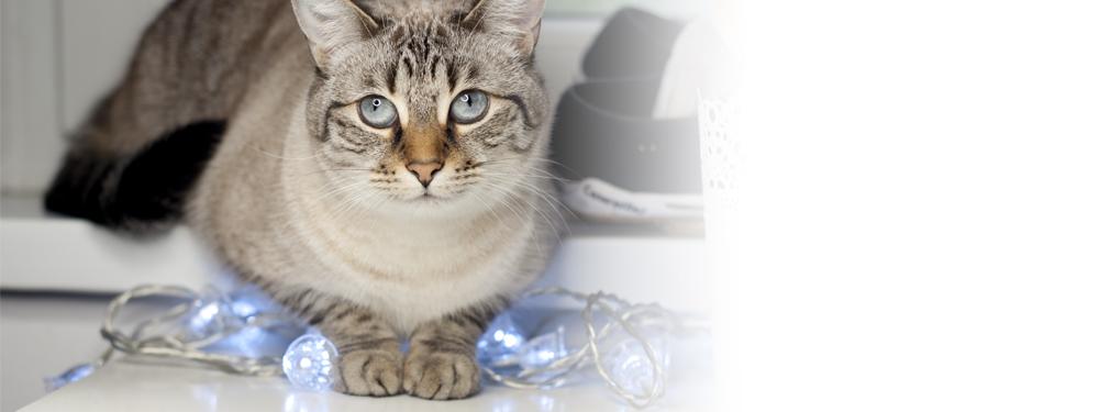 Ciężkie życie blogera… z kotem ;)